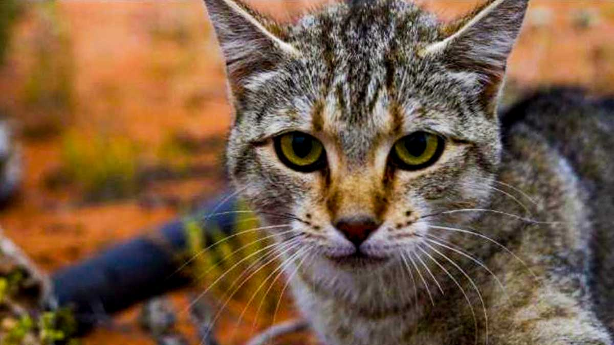 4638daf49283 Ενδοπαράσιτα στις γάτες - Ότι πρέπει να γνωρίζετε - Living With Cats