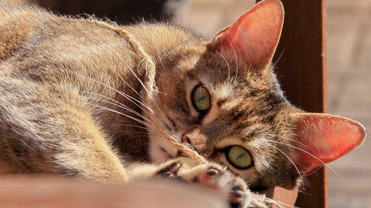 5e1b4bd11fc6 Επικίνδυνες τροφές για την γάτα - Living With Cats