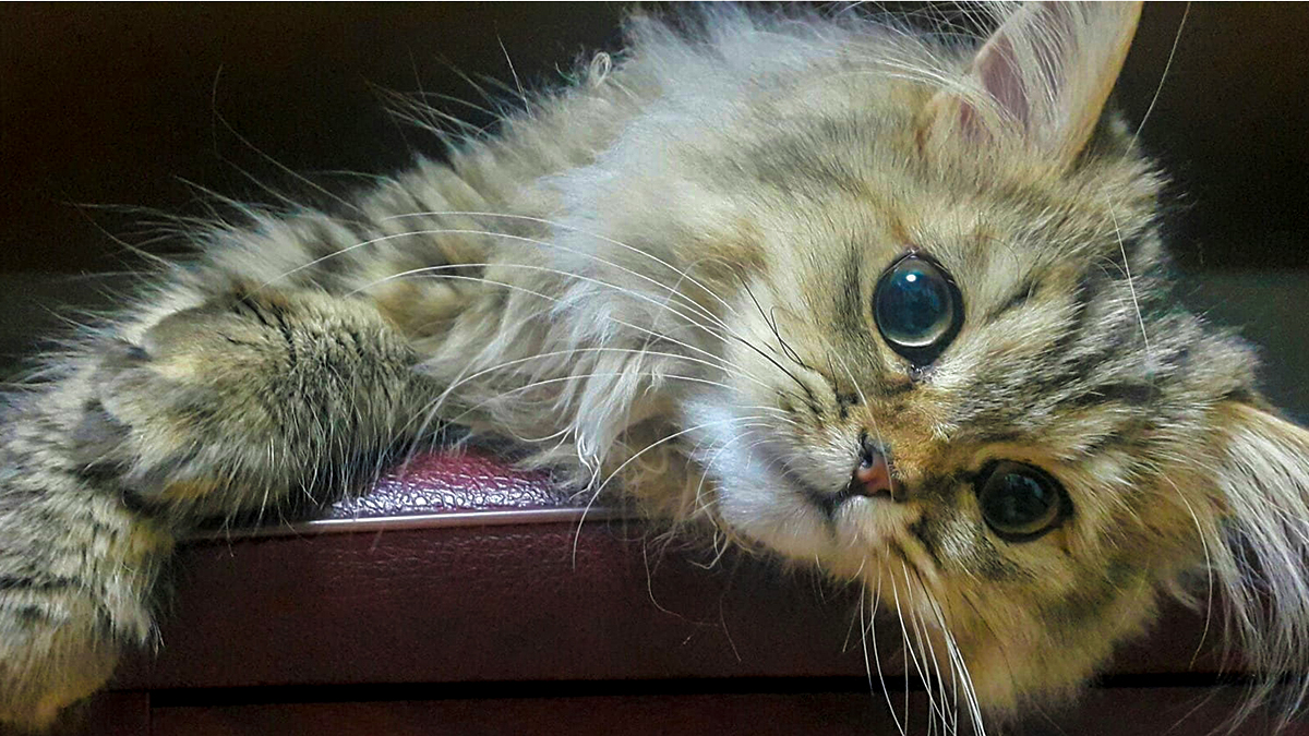 b2cebc5e5514 Γιατί μαδάει η γάτα μου  Ποιες μπορεί να είναι οι αιτίες  - Living ...
