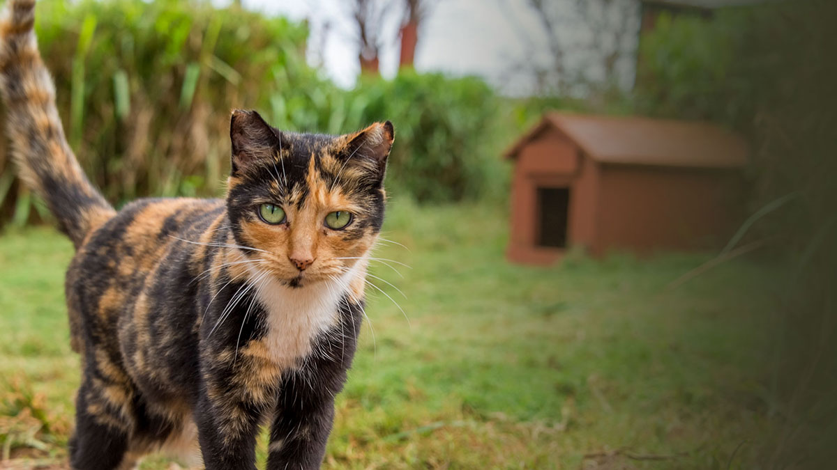 6a6fd161c382 Γιατί οι γάτες κουβαλάνε νεκρά ζώα στο σπίτι   vds  - Living With Cats